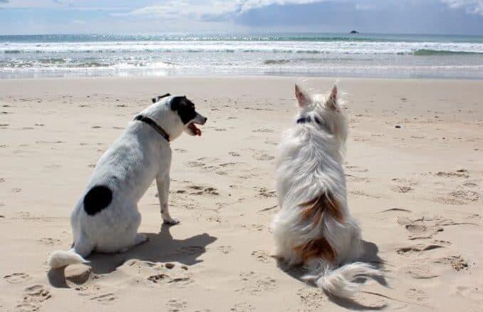 Die schönsten Hundestrände auf Rügen