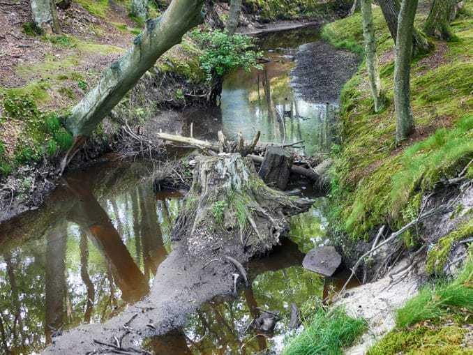 Bachlauf durch den Buchenwald Orzechowo Morskie
