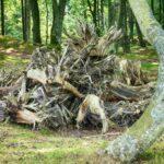 steilkueste-10-150x150 Steilküste in Orzechowo Polnische Ostsee 🇵🇱 Ausflugsziele