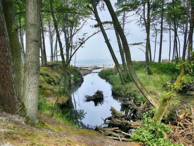 Blick aus dem Buchenwald Orzechowo Morskie auf die Ostsee