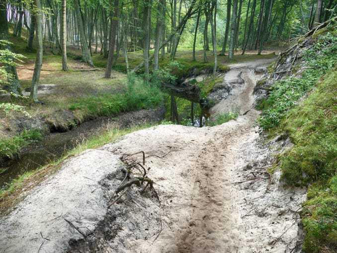 Wanderweg zum Strand im Buchenwald Orzechowo Morskie