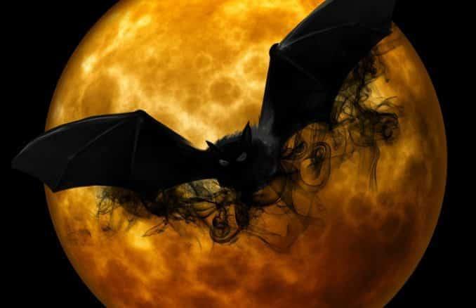 Noctalis - Welt der Fledermäuse in Bad Segeberg