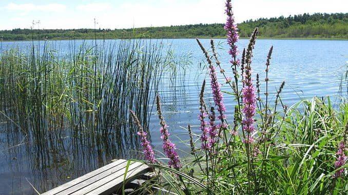 Grosser Pinnower See im Lassaner Winkel (Usedom / Mecklenburg-Vorpommern)