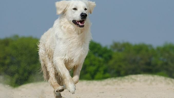 Hund am Ostsee Strand