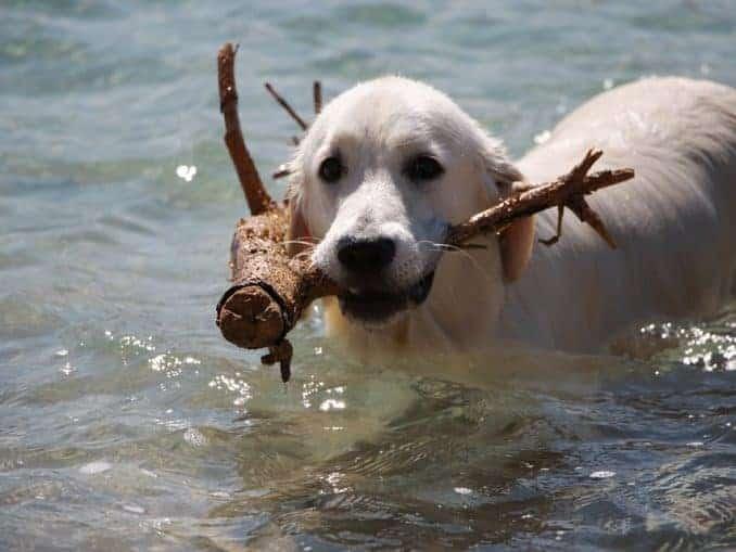 Swinemünde mit Hund (Unterkünfte)