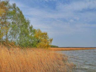 Naturschutzgebiet Südspitze Halbinsel Gnitz 🇩🇪 Ausflugsziele
