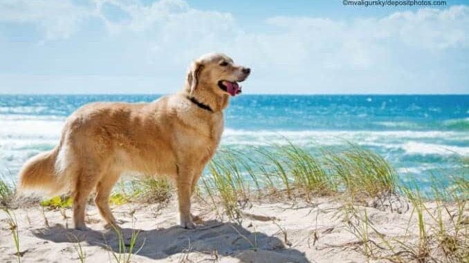 Ostseebad Dahme mit Hund