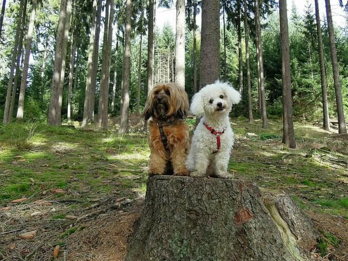 hunde-678x509 Rostocker Heide 🇩🇪 Ausflugsziele