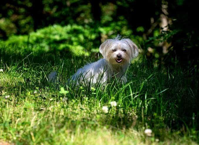 Hund im Hundeauslauf