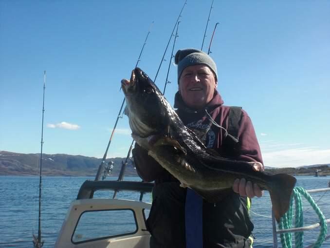 Abbildung 2: Der Dorsch ist ein bei Anglern sehr beliebter Fisch.
