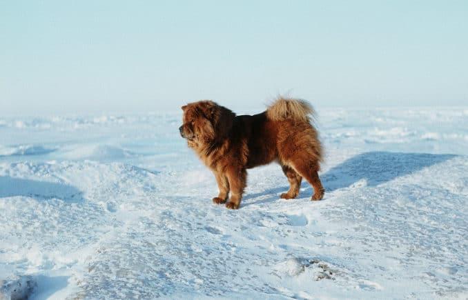 Hund an der Ostsee im Winter