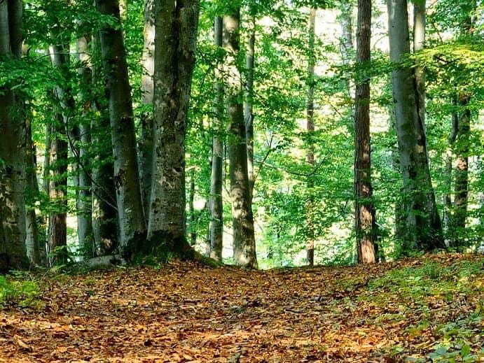Stadtwald von Kiel
