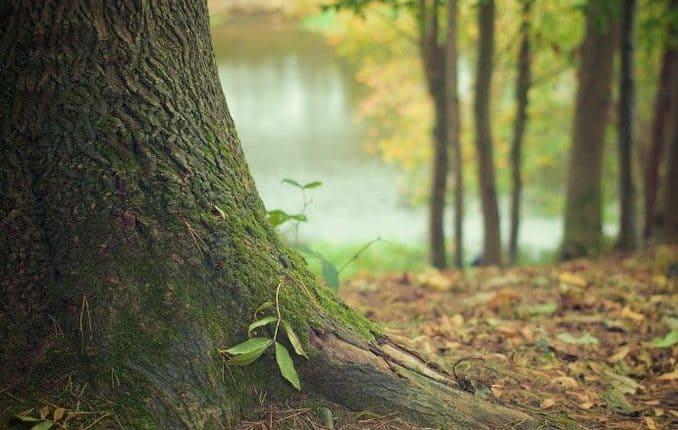 Waldgebiet Klützer Winkel